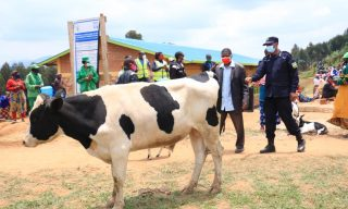 Nyamagabe: RNP Donates Bull to Residents of Subukiniro Village