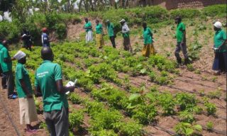 Sponsored: GCS Supports Hillside Irrigation In Kamonyi District