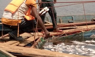 Minagri Intervenes to Stop Heavy Loss Among Rwamagana's Fish Farmers