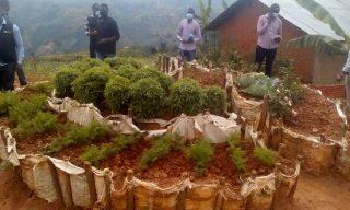 Vegetable Gardens: Nyamagabe Mothers Bridging Balanced Diet Gaps