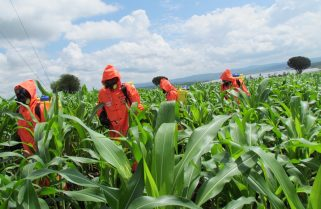 Hinga Weze Injects Rwf 2.5Bn in Farmers' Financing