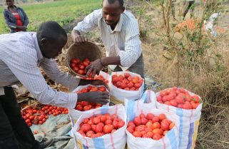 Rwanda: New Statistics Show Slow Growth in Q1 2020