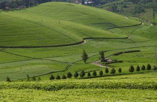UNICEF, NAEB Launch Childcare Program In Tea Plantations