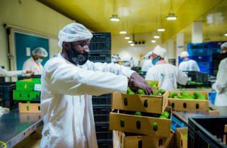 ITC Enhances Rwandan Avocado Exports