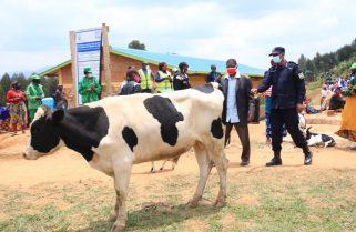 Nyamagabe: RNP Donates Bull to Residents of Subukiniro Village