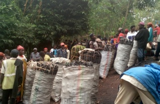 Rwanda Wants Bids to Replace Firewood