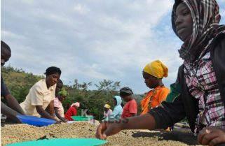 Gov't Sets $95M Target From Coffee Exports