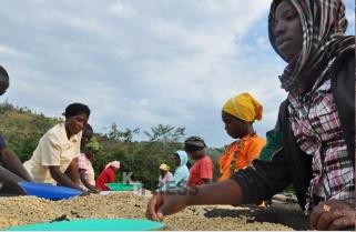 115 Years of Rwanda Coffee
