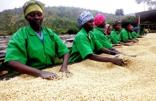 Rwanda Reviews Coffee Prices