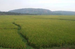 Rwanda's Eastern Province Get $49.6M Green Climate Funding