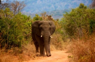 Rwanda Offers 3-Month Free Access to All Tour Sites