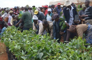 Rwanda to Plant 43,000 Hectares of Trees In Six Months