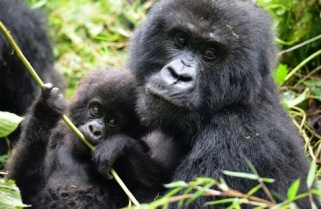 Over a Million Tourists Help Rwanda's Tourism Revenue Cross US$ 300m