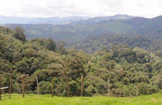 Rwanda's Gishwati-Mukura Landscape Becomes UNESCO's Biosphere Reserve
