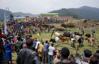 Kwita Izina Update: Cycling Race Excites Kayonza Residents as RDB Hands over 729 Cows