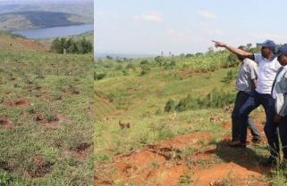 Rwanda Launches Private Forests Management Units