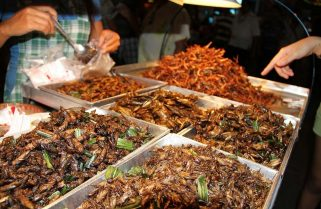 Eat More Plants And Insects For Better Health And To Save The Planet