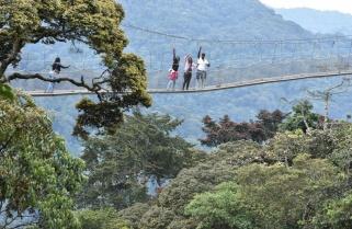 Rwanda's Nyungwe Canopy Walkway Reopens to Visitors