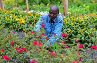 Meet the Men Turning Kigali Green