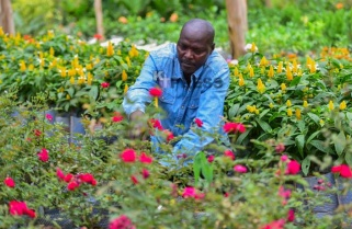 Four Companies Nominated for Horticulture Intl Trade Fair