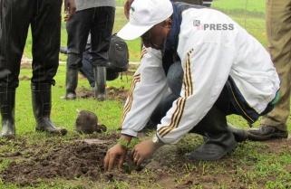 Rwandans Plant Trees Across the Country During Umuganda