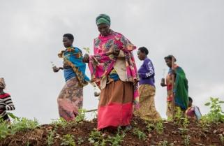 Rwanda Kicks Off Tree Planting Season