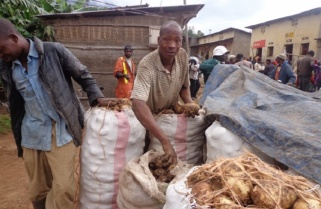 Rwanda Potato Farmers Regain Power to Sell Harvest without Middlemen