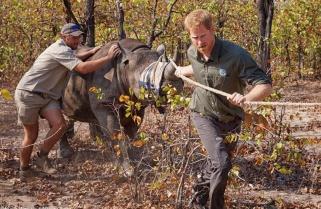 Prince Harry to Oversee Rwanda's Akagera Park