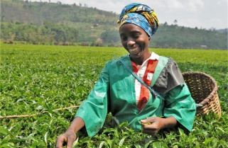 Uganda Expo: Rwanda Tea Scoops All the Best Awards