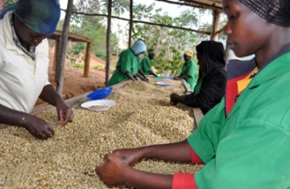 Tracking the price farmers pay for Rwanda's premium coffee