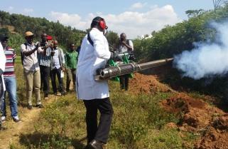 Rwanda Plants Anti Malaria Trees in Prone Areas