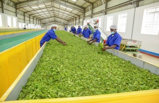 Rwanda's Tea Factory Breaks Highest Price Record in Kenya
