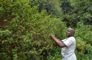Promoting Herbalists: Kigali Creates a Healing Garden