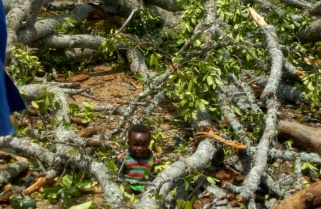Incredible But Real Story: How Did the Toddler Survive This Huge Tree?