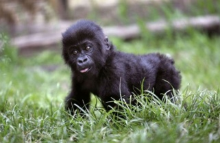 Were You Born on July 4th? Win a Permit to Visit Gorillas