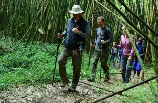 Rwandan Gorillas Are Americans' Biggest Choice