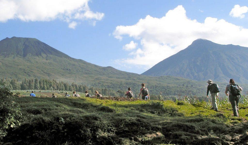 Rwanda Starts Expansion Of Mountain Gorilla's Habitat