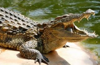 Rwanda's Natural History Museum Introduces Crocodiles