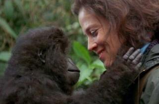 Documentary to Reveal 'Gorillas Secrets' in Rwanda