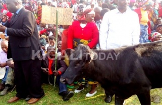 Rwandans Might Walk Cows Into Parliament