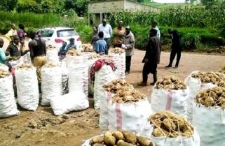 Rwanda Makes Irish Potatoes 'Staple' Food Again