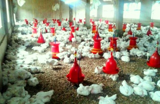 Rwanda to Host First Poultry Expo in Africa