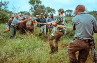 South Africa, Rwanda Sign Wildlife Conservation Agreement