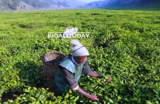 Agriculture Ministry 'Not Worried' by 30% Budget Cut